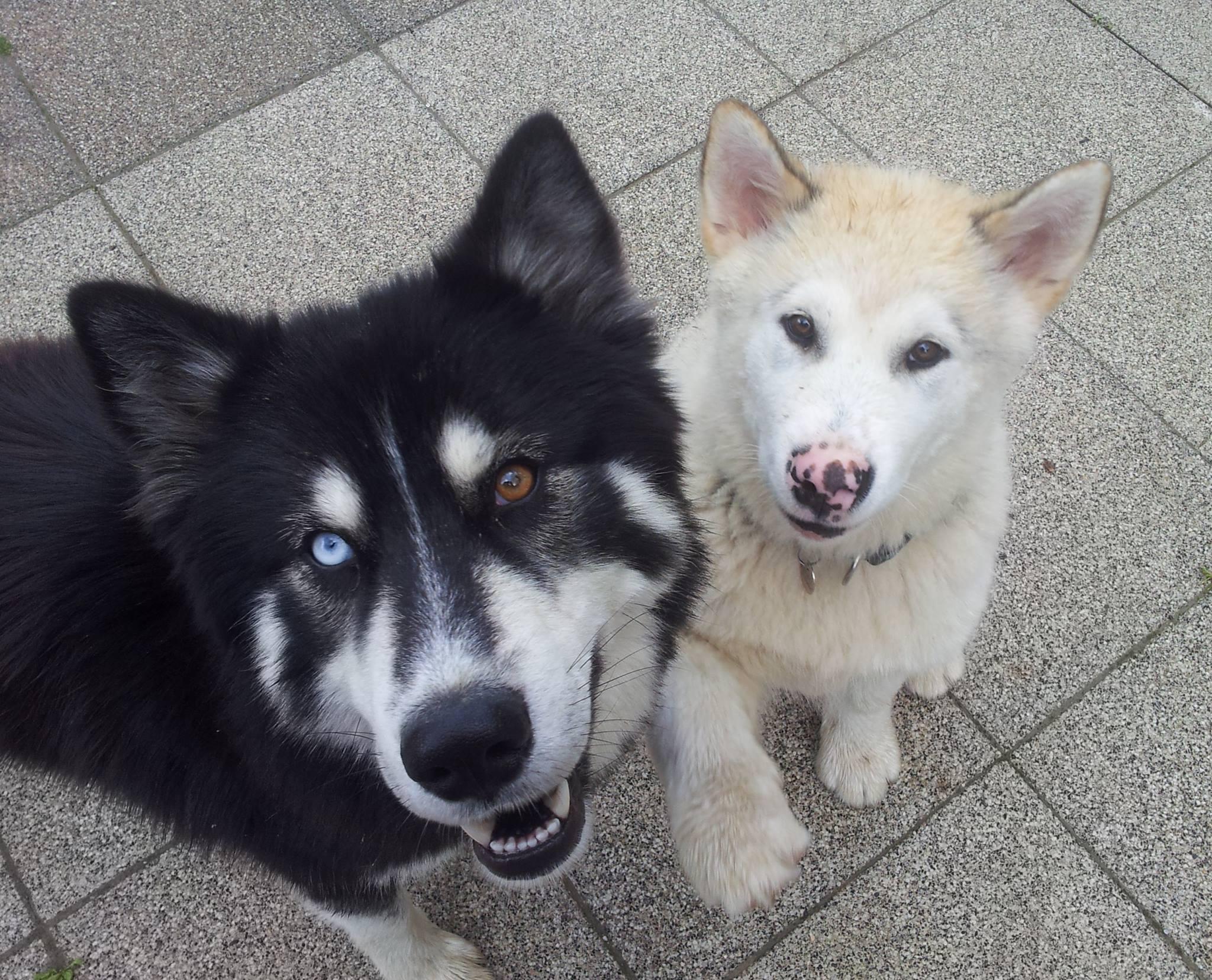 alimentation pour chiens à Guebwiller