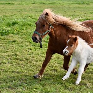 Grands animaux de compagnie